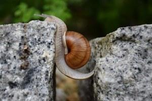 snail-1447233__340